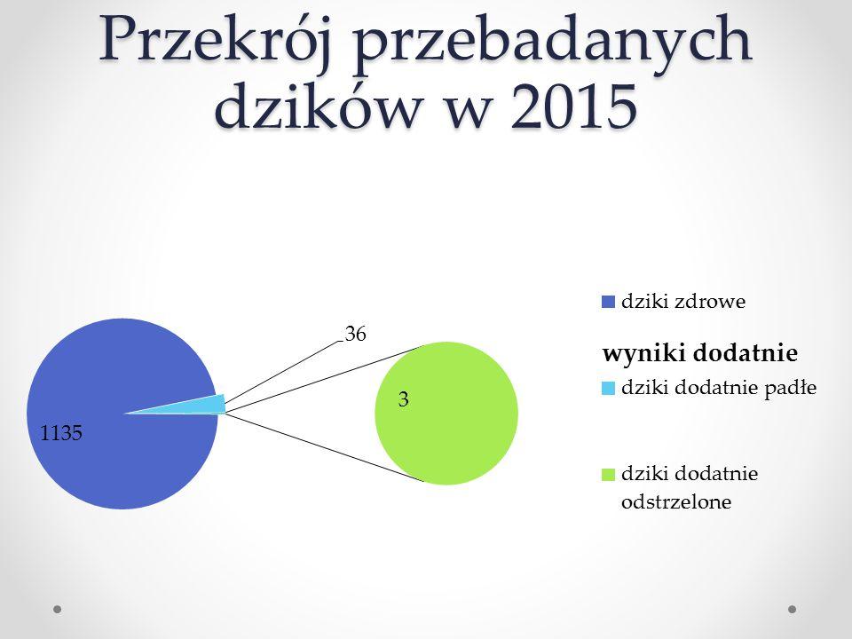 Przekrój przebadanych dzików w 2015