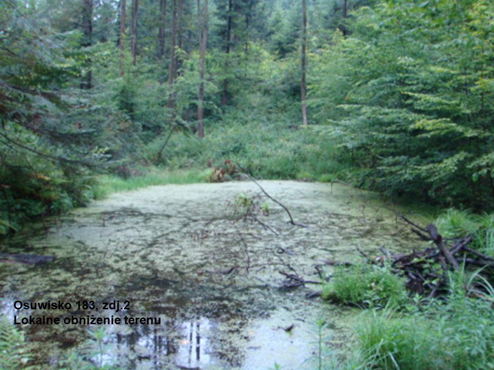 Osuwisko 183, zdj.2 Lokalne obniżenie terenu