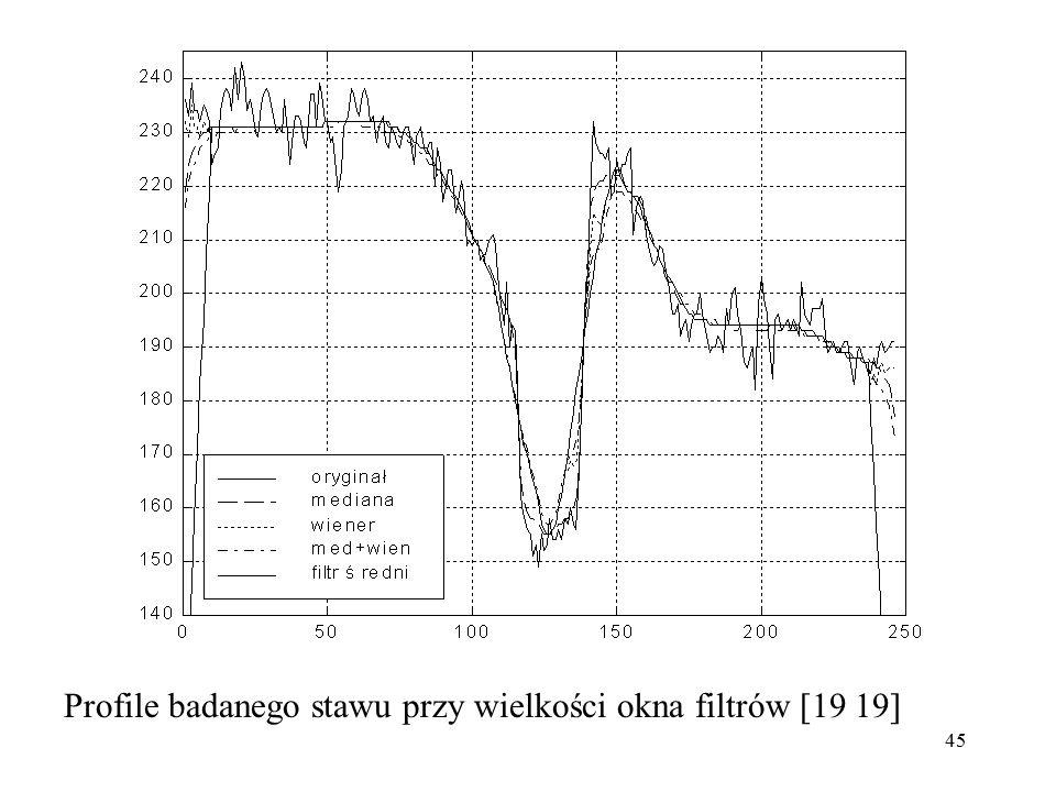 45 Profile badanego stawu przy wielkości okna filtrów [19 19]