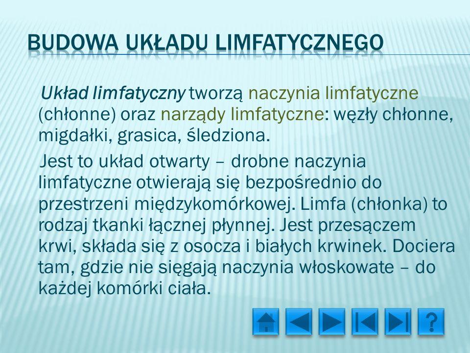 Układ limfatyczny tworzą naczynia limfatyczne (chłonne) oraz narządy limfatyczne: węzły chłonne, migdałki, grasica, śledziona.
