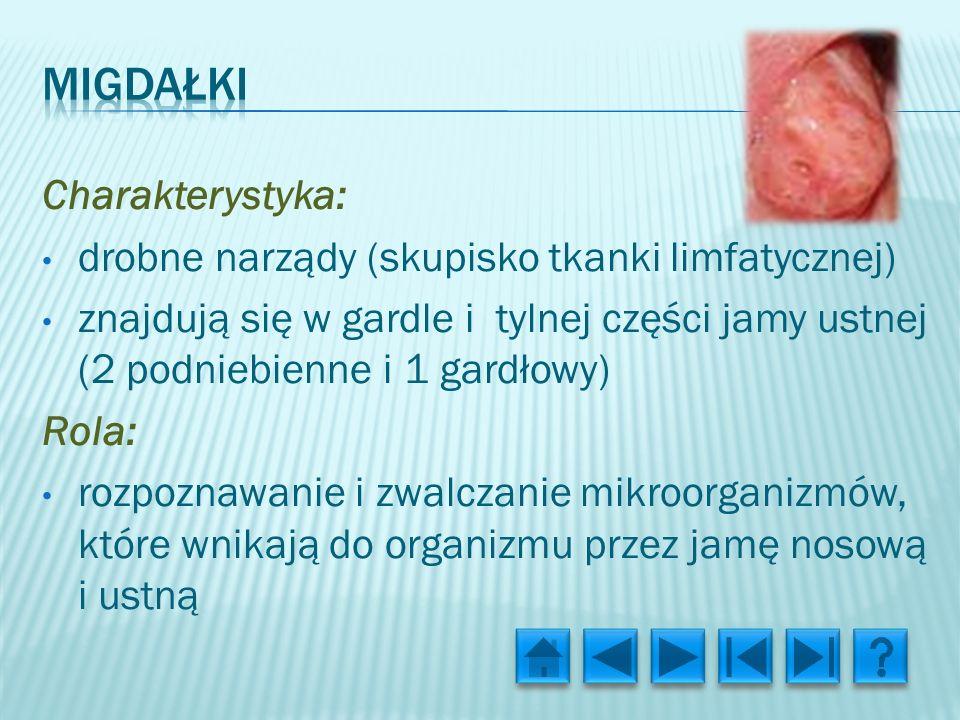 Charakterystyka: drobne narządy (skupisko tkanki limfatycznej) znajdują się w gardle i tylnej części jamy ustnej (2 podniebienne i 1 gardłowy) Rola: rozpoznawanie i zwalczanie mikroorganizmów, które wnikają do organizmu przez jamę nosową i ustną