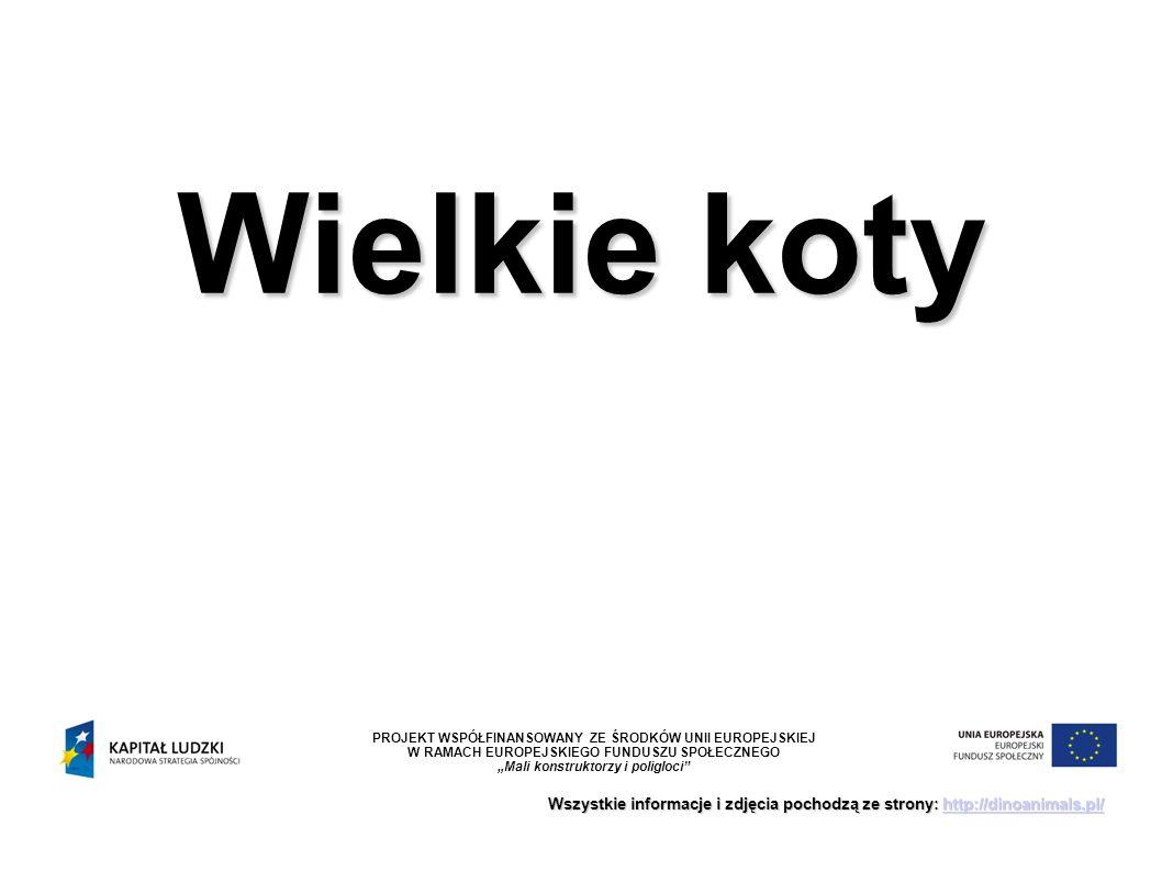 """Wielkie koty Wszystkie informacje i zdjęcia pochodzą ze strony: http://dinoanimals.pl/ http://dinoanimals.pl/ PROJEKT WSPÓŁFINANSOWANY ZE ŚRODKÓW UNII EUROPEJSKIEJ W RAMACH EUROPEJSKIEGO FUNDUSZU SPOŁECZNEGO """"Mali konstruktorzy i poligloci"""