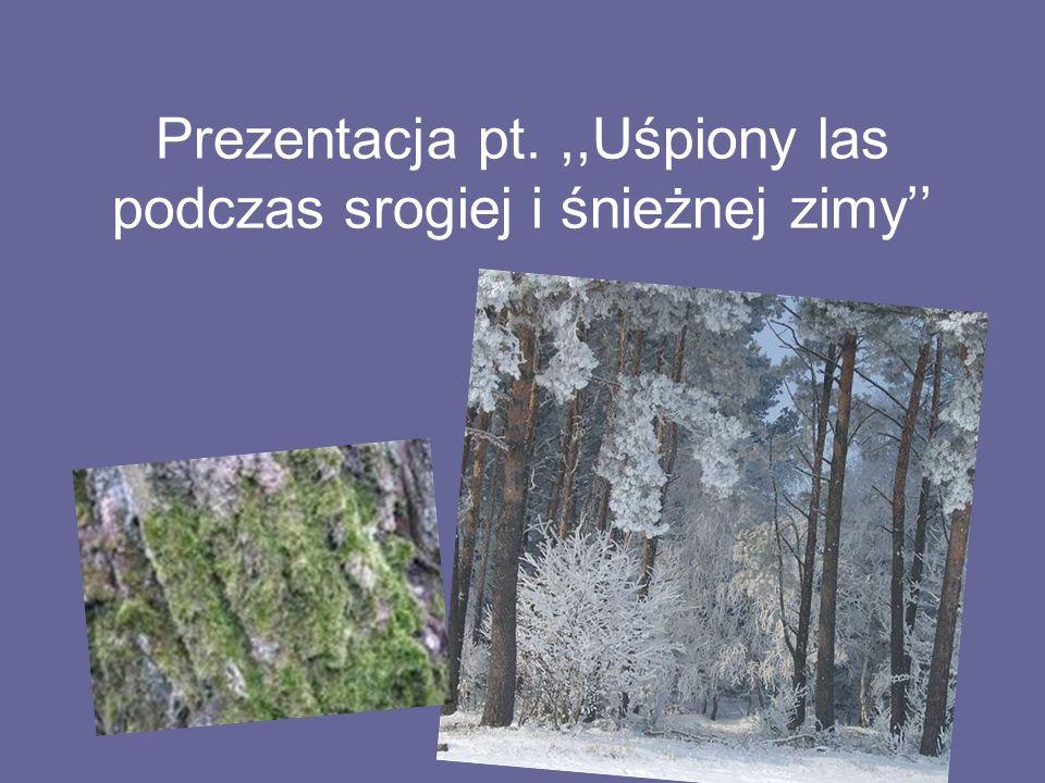 Prezentacja pt.,,Uśpiony las podczas srogiej i śnieżnej zimy''