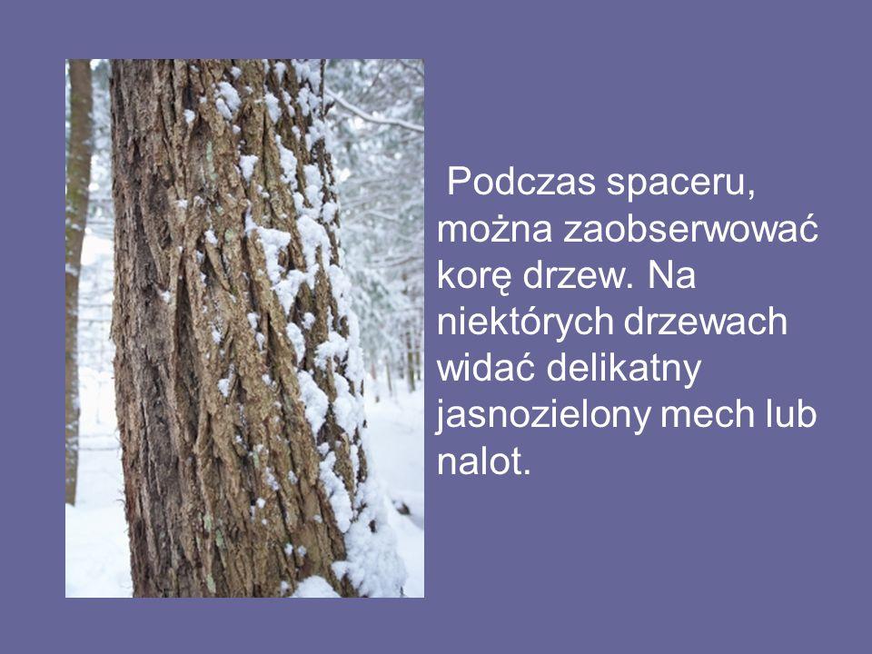 Podczas spaceru, można zaobserwować korę drzew. Na niektórych drzewach widać delikatny jasnozielony mech lub nalot.