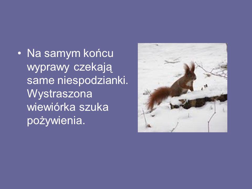 Na samym końcu wyprawy czekają same niespodzianki. Wystraszona wiewiórka szuka pożywienia.