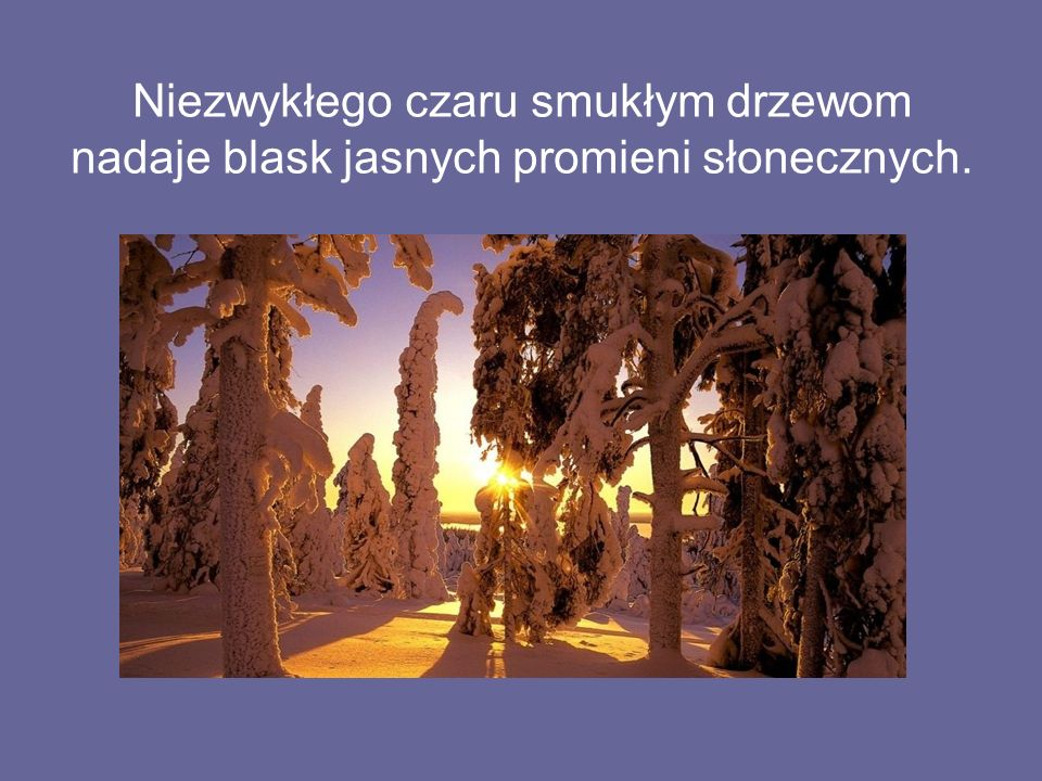 Niezwykłego czaru smukłym drzewom nadaje blask jasnych promieni słonecznych.