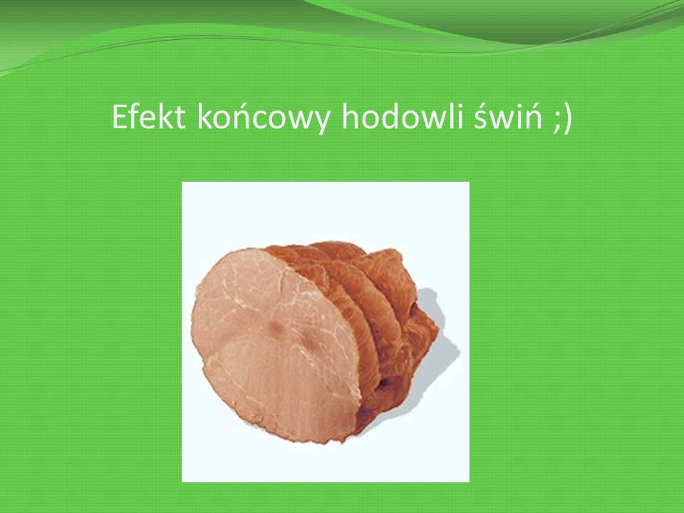 Efekt końcowy hodowli świń ;)
