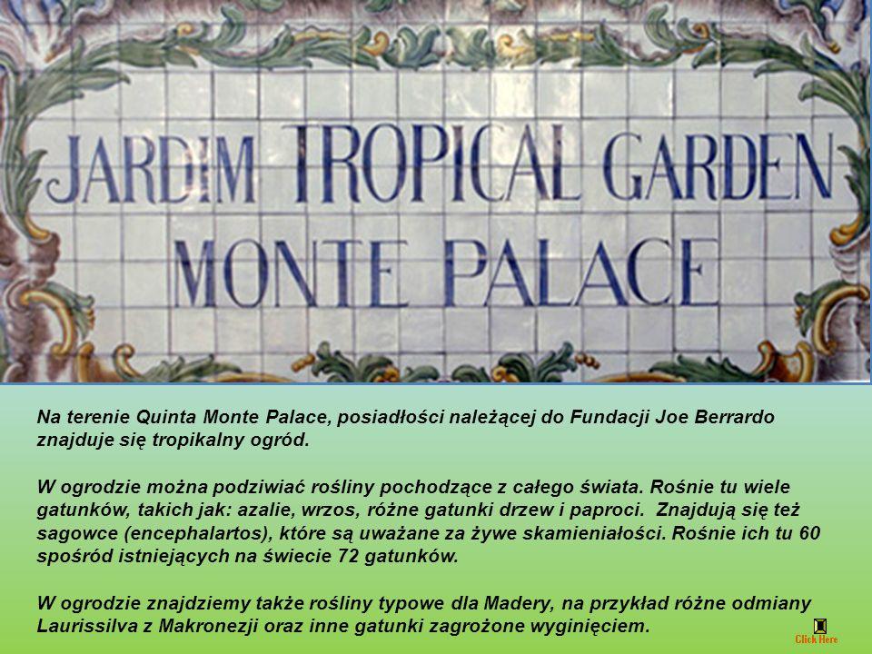 Widok ze stacji górnej Monte - Largo das Babosas