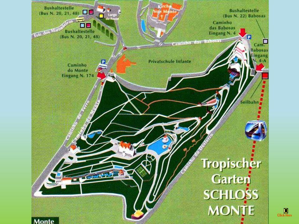 Na terenie Quinta Monte Palace, posiadłości należącej do Fundacji Joe Berrardo znajduje się tropikalny ogród.
