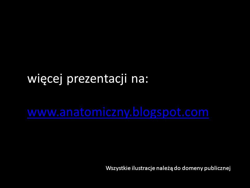 więcej prezentacji na: www.anatomiczny.blogspot.com Wszystkie ilustracje należą do domeny publicznej