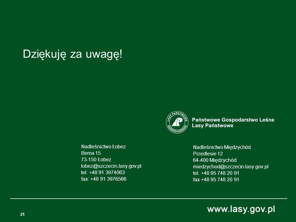 21 Nadleśnictwo Międzychód Przedlesie 12 64-400 Międzychód miedzychod@szczecin.lasy.gov.pl tel.