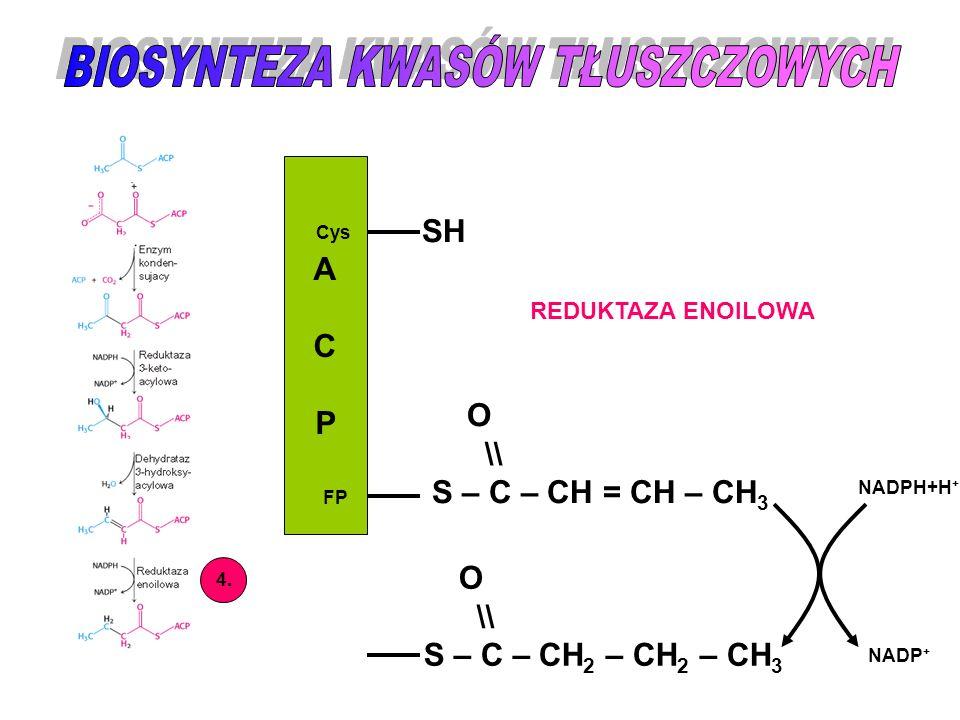 ACPACP Cys FP SH O \\ S – C – CH = CH – CH 3 4. REDUKTAZA ENOILOWA O \\ S – C – CH 2 – CH 2 – CH 3 NADPH+H + NADP +