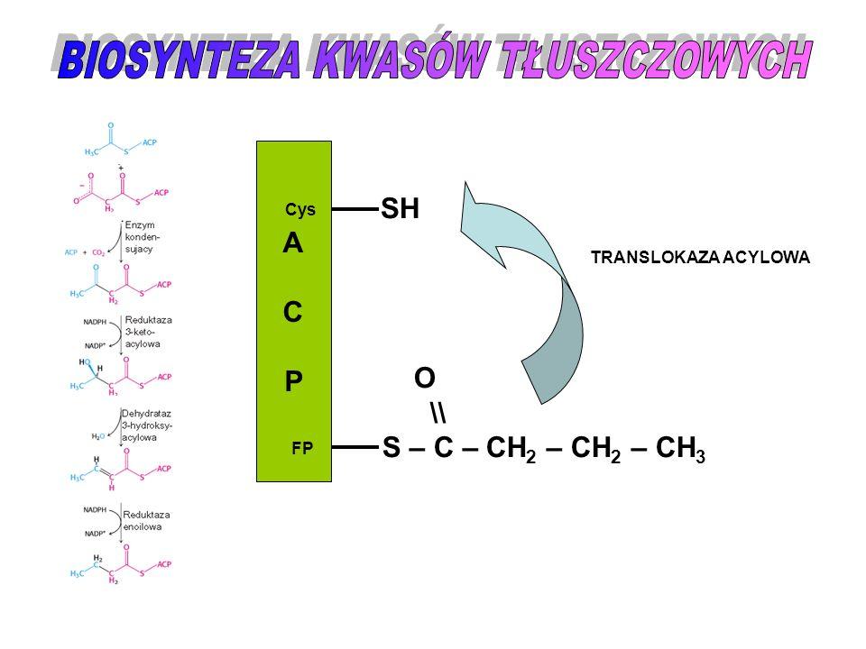ACPACP Cys FP SH O \\ S – C – CH 2 – CH 2 – CH 3 TRANSLOKAZA ACYLOWA