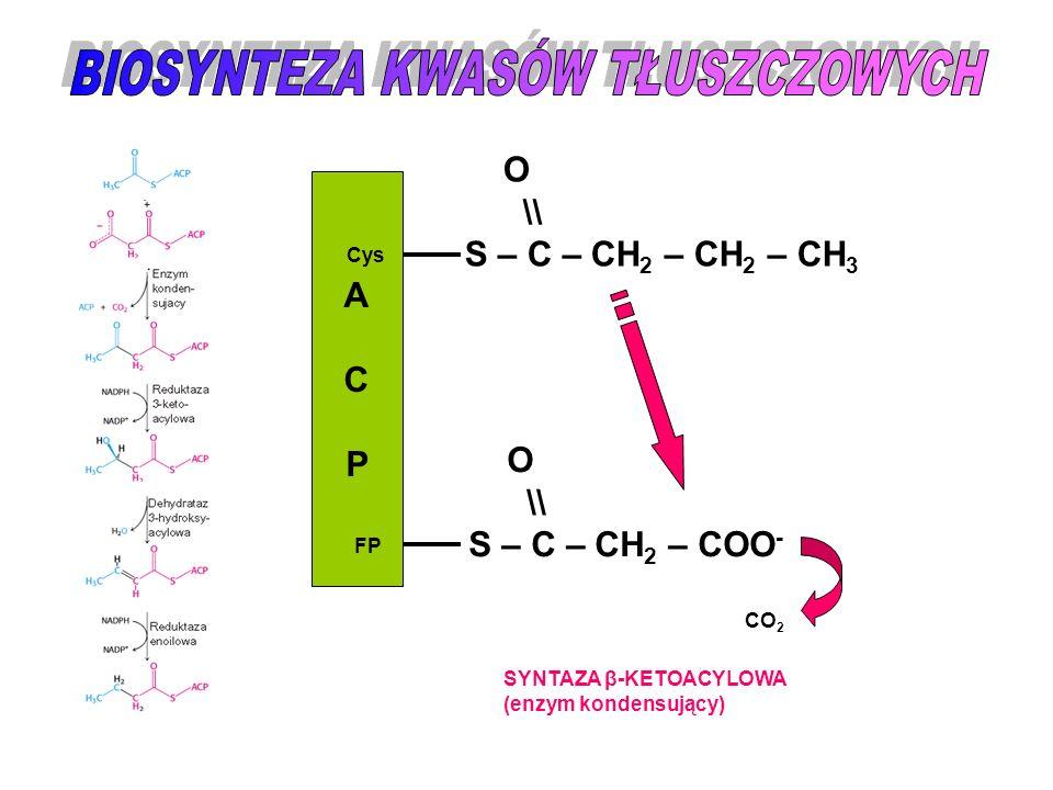 ACPACP Cys FP O \\ S – C – CH 2 – CH 2 – CH 3 O \\ S – C – CH 2 – COO - CO 2 SYNTAZA β-KETOACYLOWA (enzym kondensujący)