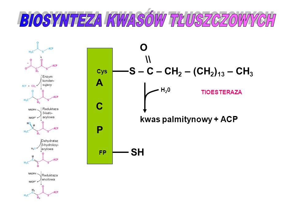 ACPACP Cys FP O \\ S – C – CH 2 – (CH 2 ) 13 – CH 3 SH TIOESTERAZA H20H20 kwas palmitynowy + ACP