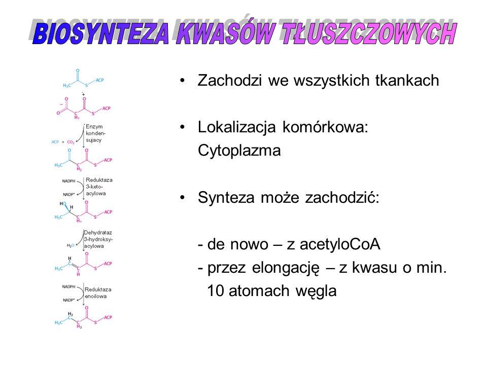 Zachodzi we wszystkich tkankach Lokalizacja komórkowa: Cytoplazma Synteza może zachodzić: - de nowo – z acetyloCoA - przez elongację – z kwasu o min.