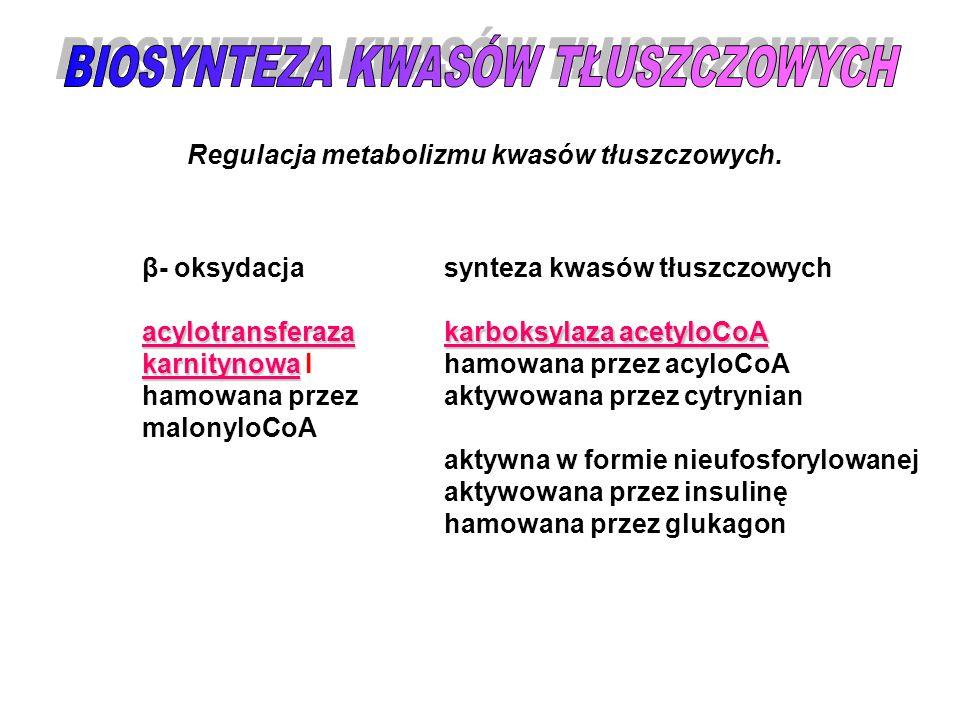 Regulacja metabolizmu kwasów tłuszczowych. β- oksydacjaacylotransferaza karnitynowa karnitynowa I hamowana przez malonyloCoA synteza kwasów tłuszczowy