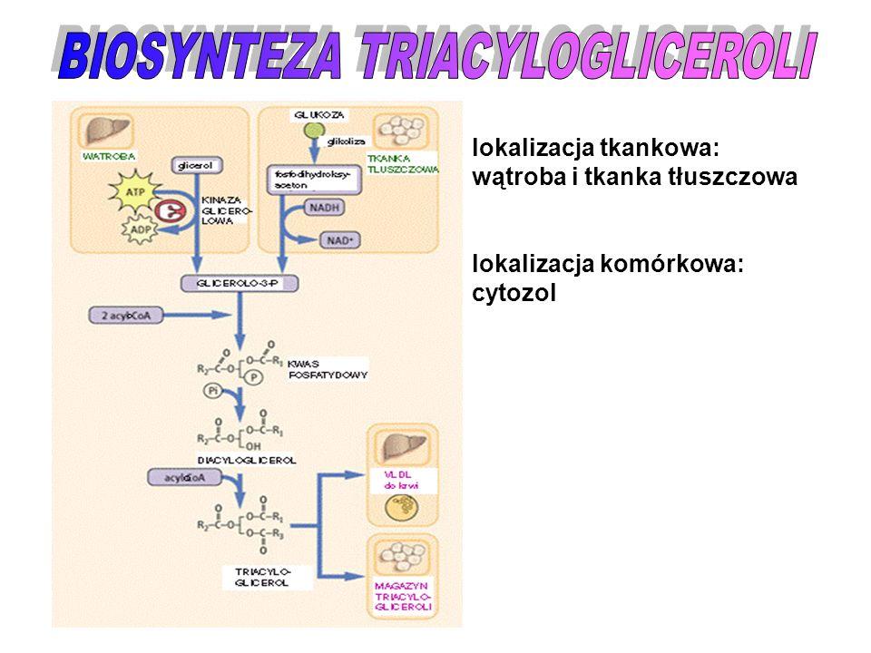 lokalizacja tkankowa: wątroba i tkanka tłuszczowa lokalizacja komórkowa: cytozol