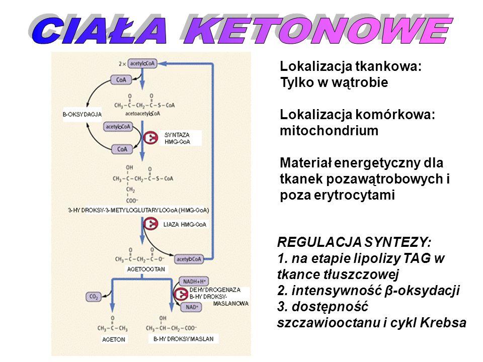 REGULACJA SYNTEZY: 1. na etapie lipolizy TAG w tkance tłuszczowej 2. intensywność β-oksydacji 3. dostępność szczawiooctanu i cykl Krebsa Lokalizacja t