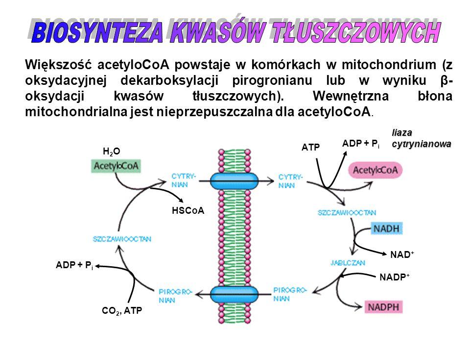 TWORZENIE MALONYLOCoA O // CH 3 – C ~SCoA O // - OOC – CH 3 – C ~SCoA CO 2, ATP ADP + P i Enzym: KARBOKSYLAZA ACETYLOCoA klasa: VI (ligazy) reakcja nieodwracalna enzym regulatorowy: * allosterycznie (+) cytrynian (─) acyloCoA długołańcuchowy * hormonalnie aktywna w formie nie ufosforylowanej