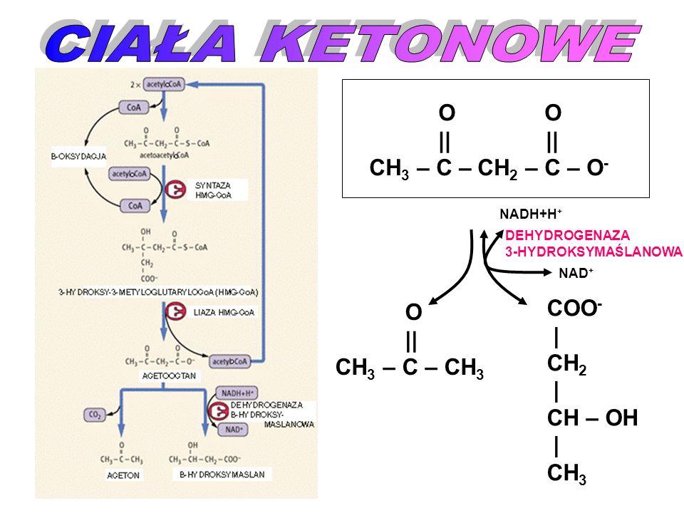 O || CH 3 – C – CH 3 O O || || CH 3 – C – CH 2 – C – O - COO - | CH 2 | CH – OH | CH 3 NADH+H + NAD + DEHYDROGENAZA 3-HYDROKSYMAŚLANOWA