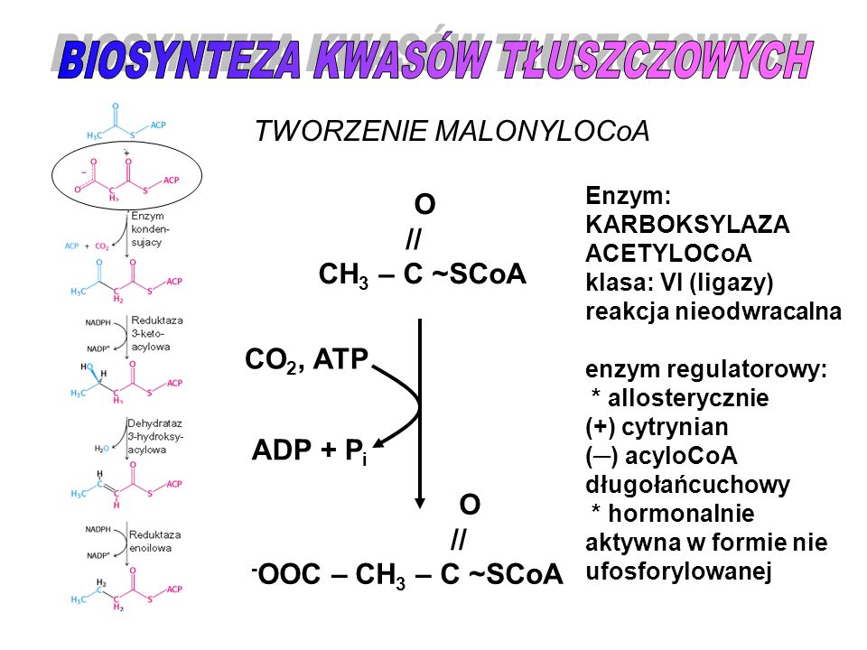 Etapy syntezy: Kondensacja enzym: syntaza 3- ketoacylowa Redukcja enzym: reduktaza 3-ketoacylowa Odwodnienie enzym: dehydrataza 3- hydroksyacylowa Redukcja enzym: reduktaza enoilowa