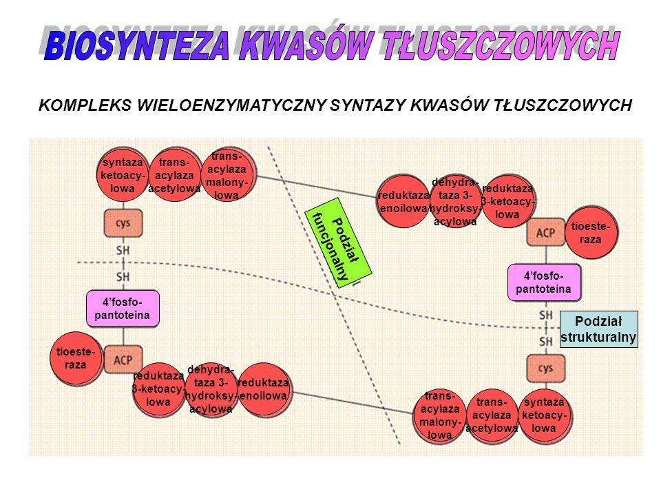 KOMPLEKS WIELOENZYMATYCZNY SYNTAZY KWASÓW TŁUSZCZOWYCH syntaza ketoacy- lowa reduktaza enoilowa trans- acylaza acetylowa trans- acylaza malony- lowa t