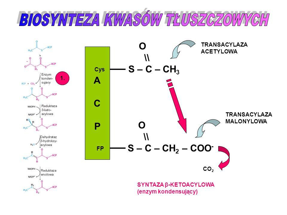 TWORZENIE WIĄZANIA NIENASYCONEGO PRZY C9 StearoiloCoA + Enzym Stearoilo-enzym Hydroksystearoilo-enzym Oleilo-enzym OleiloCoA + Enzym HSCoA H2OH2O O 2, NADH+H + H 2 O, NAD + HSCoA TRANSFERAZA ACYLOWA HYDROKSYLAZA ACYLOWA (Cyt b 5 ) DEHYDRATAZA HYDROKSYACYLOWA (hydrataza enoilowa) TRANSFERAZA ACYLOWA KOMPLEKS MIKROSOMALNY  9 - DESATURAZY CH 3 (CH 2 ) 7 CH 2 CH 2 (CH 2 ) 7 CO-SCoA OH | CH 3 (CH 2 ) 7 CH 2 CH(CH 2 ) 7 CO-SCoA CH 3 (CH 2 ) 7 CH =CH(CH 2 ) 7 CO-SCoA