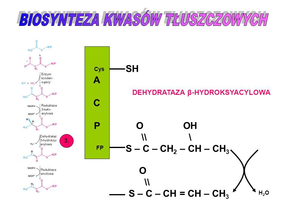 ACPACP Cys FP SH O \\ S – C – CH = CH – CH 3 3. DEHYDRATAZA β-HYDROKSYACYLOWA O OH \\ \ S – C – CH 2 – CH – CH 3 H2OH2O