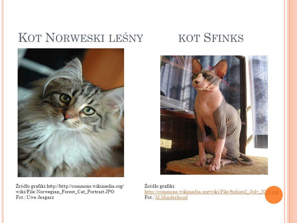 K OT N ORWESKI LEŚNY KOT S FINKS Źródło grafiki:http://http://commons.wikimedia.org/ wiki/File:Norwegian_Forest_Cat_Portrait.JPG Fot.: Uwe Jesgarz Źró