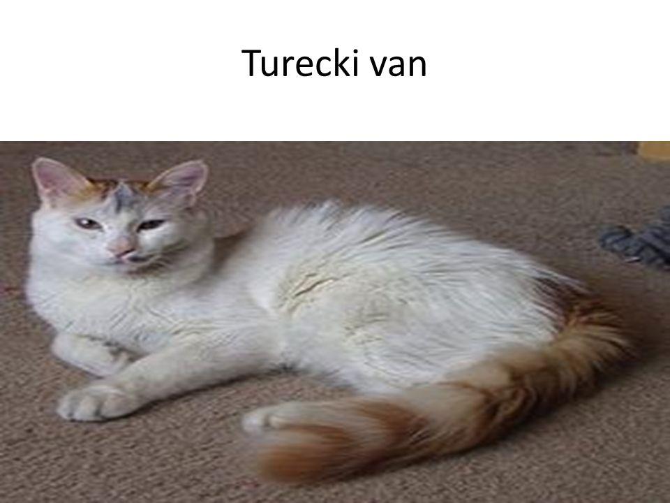 Turecki van