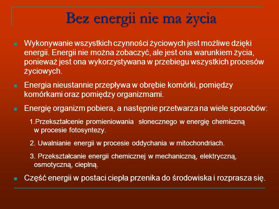 Bez energii nie ma życia Wykonywanie wszystkich czynności życiowych jest możliwe dzięki energii.
