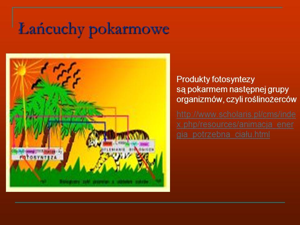 Łańcuchy pokarmowe Produkty fotosyntezy są pokarmem następnej grupy organizmów, czyli roślinożerców http://www.scholaris.pl/cms/inde x.php/resources/animacja_ener gia_potrzebna_ciału.html
