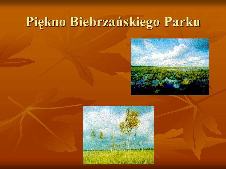 Piękno Biebrzańskiego Parku