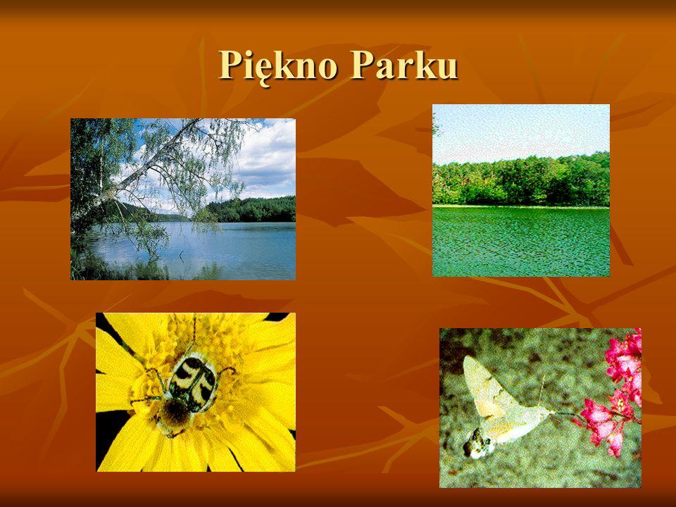 Piękno Parku