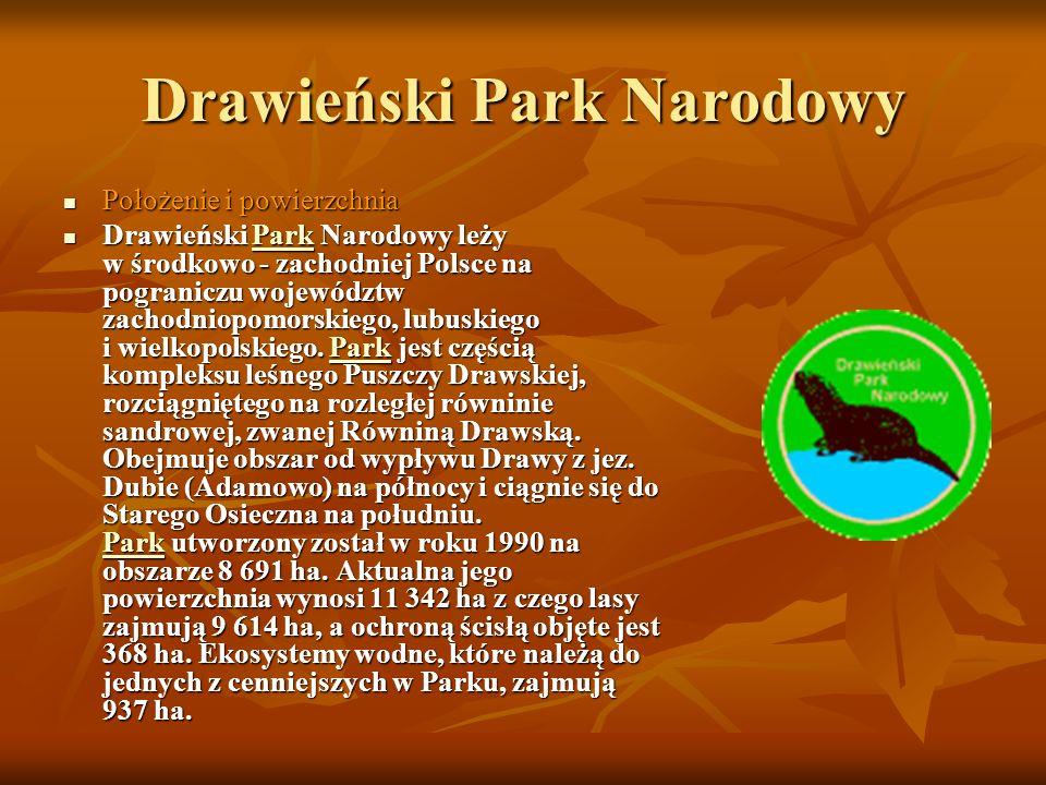 Drawieński Park Narodowy Położenie i powierzchnia Położenie i powierzchnia Drawieński Park Narodowy leży w środkowo - zachodniej Polsce na pograniczu województw zachodniopomorskiego, lubuskiego i wielkopolskiego.