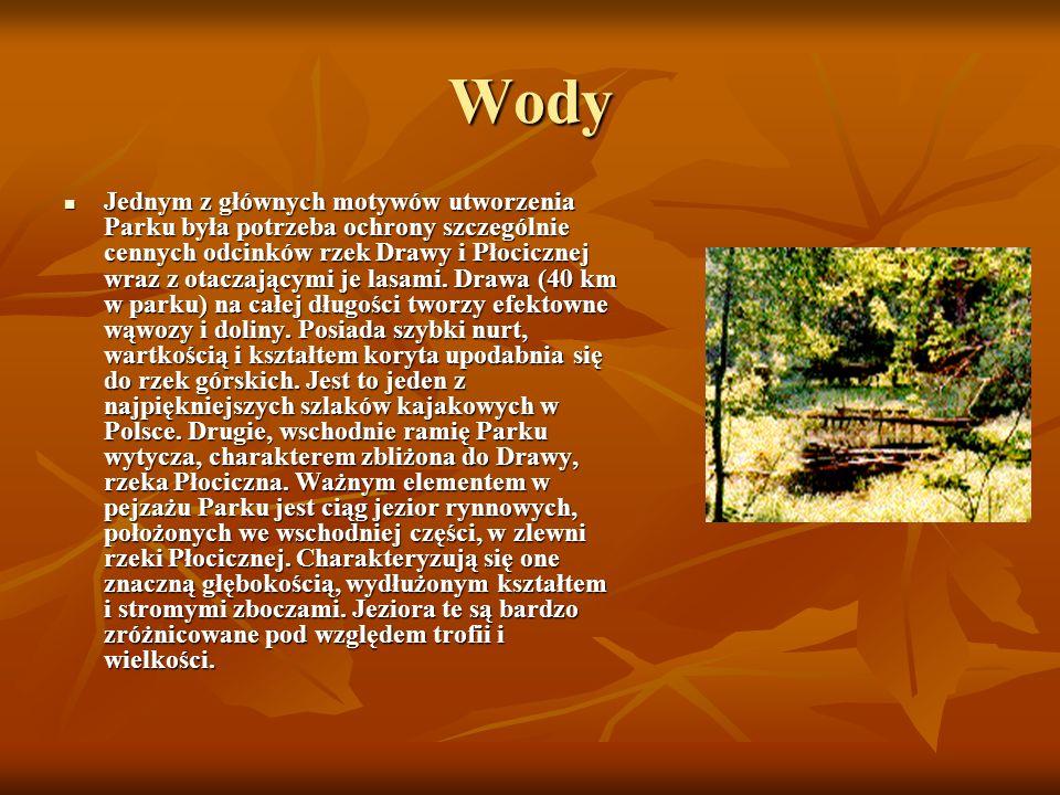 Wody Jednym z głównych motywów utworzenia Parku była potrzeba ochrony szczególnie cennych odcinków rzek Drawy i Płocicznej wraz z otaczającymi je lasami.