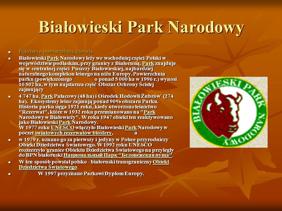 Białowieski Park Narodowy Położenie, powierzchnia, historia Położenie, powierzchnia, historia Białowieski Park Narodowy leży we wschodniej części Polski w województwie podlaskim, przy granicy z Białorusią.