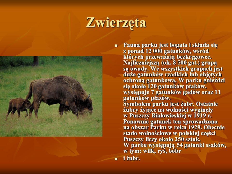Biebrzański Park Narodowy Położenie i powierzchnia Położenie i powierzchnia Biebrzański Park Narodowy został utworzony w 1993 roku.
