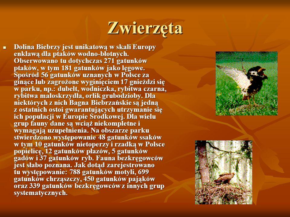 Zwierzęta Dolina Biebrzy jest unikatową w skali Europy enklawą dla ptaków wodno-błotnych.