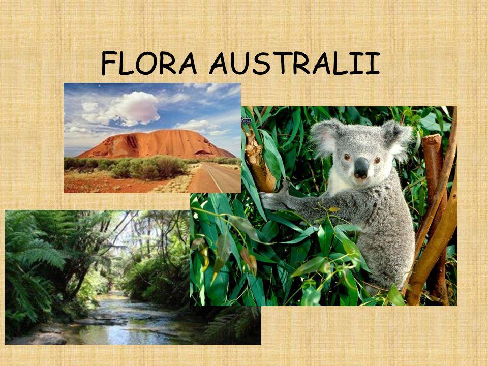 FLORA AUSTRALII