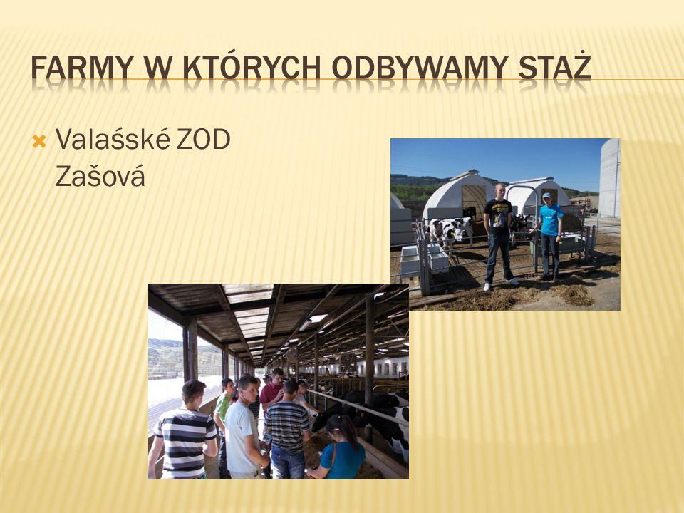  Valasske ZOD Zasova   Grunty rolne: 1575ha  W tym grunty orne 831 ha  Inne: Łąki i pastwiska 744 ha   Liczba zwierząt:  Bydło ogółem 1436 szt.