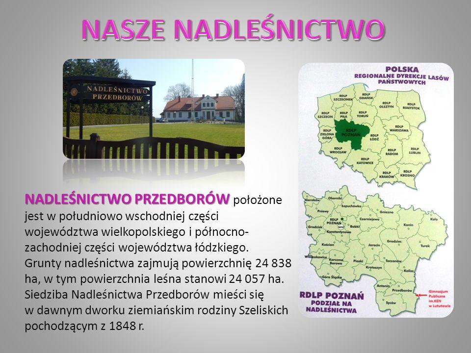NADLEŚNICTWO PRZEDBORÓW NADLEŚNICTWO PRZEDBORÓW położone jest w południowo wschodniej części województwa wielkopolskiego i północno- zachodniej części województwa łódzkiego.