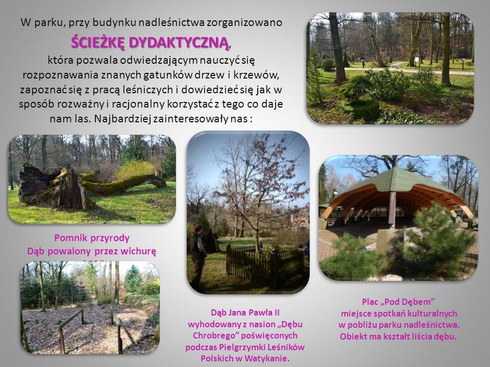 W parku, przy budynku nadleśnictwa zorganizowano ŚCIEŻKĘDYDAKTYCZNĄ ŚCIEŻKĘ DYDAKTYCZNĄ, która pozwala odwiedzającym nauczyć się rozpoznawania znanych gatunków drzew i krzewów, zapoznać się z pracą leśniczych i dowiedzieć się jak w sposób rozważny i racjonalny korzystać z tego co daje nam las.