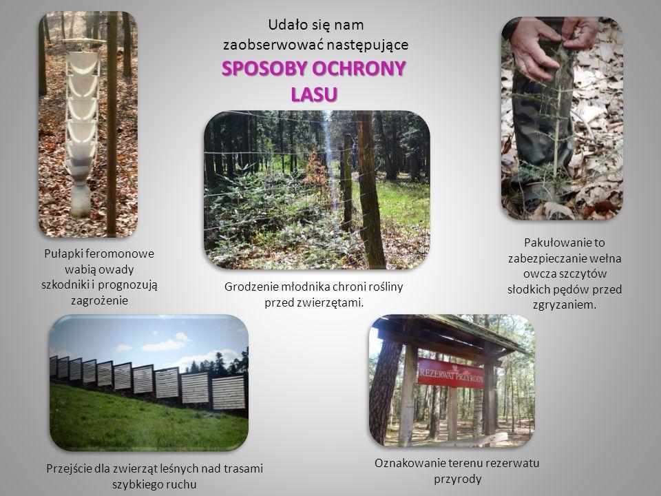 Udało się nam SPOSOBY OCHRONY LASU zaobserwować następujące SPOSOBY OCHRONY LASU Grodzenie młodnika chroni rośliny przed zwierzętami.