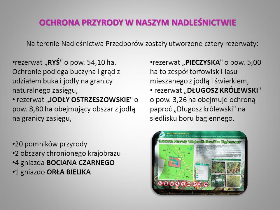"""OCHRONA PRZYRODY W NASZYM NADLEŚNICTWIE rezerwat """"RYŚ o pow."""