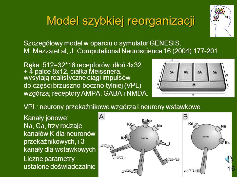 Model szybkiej reorganizacji Szczegółowy model w oparciu o symulator GENESIS.