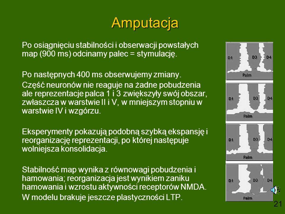Amputacja Po osiągnięciu stabilności i obserwacji powstałych map (900 ms) odcinamy palec = stymulację. Po następnych 400 ms obserwujemy zmiany. Część
