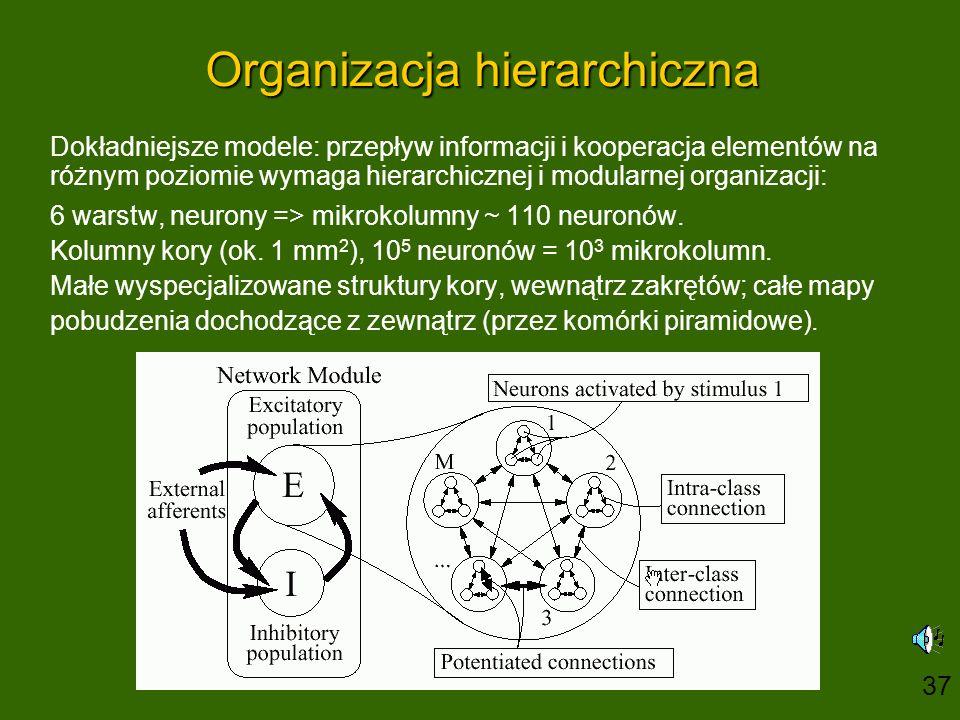 Organizacja hierarchiczna Dokładniejsze modele: przepływ informacji i kooperacja elementów na różnym poziomie wymaga hierarchicznej i modularnej organ