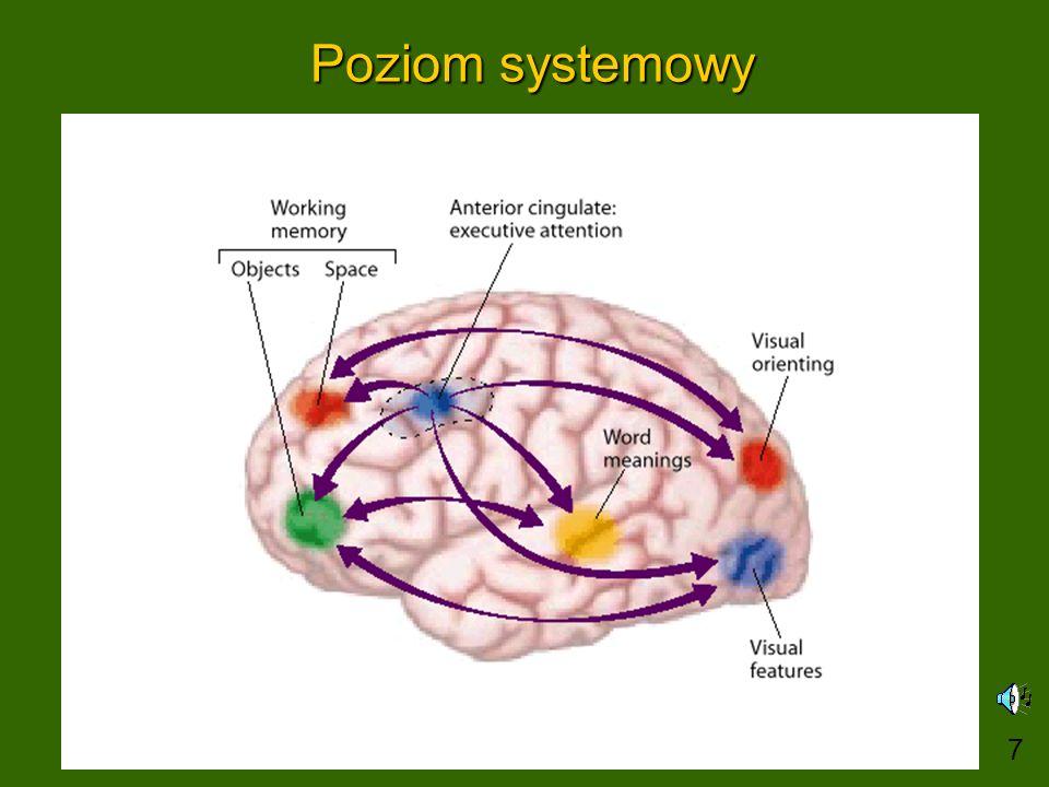 Podejście neurokognitywne Computational cognitive neuroscience: szczegółowe modele funkcji poznawczych i neuronów, pierwsza doroczna konferencja 11/2005.